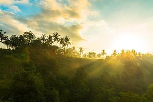 lever du soleil sur la jungle photo