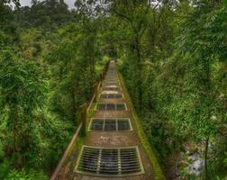 pont dans la jungle.