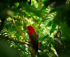 perroquet exotique dans la jungle photo