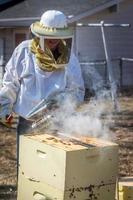 fumer les abeilles photo