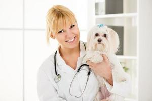 au vétérinaire photo