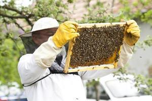 apiculteur travaillant avec des abeilles photo