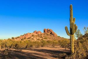 cactus du désert photo