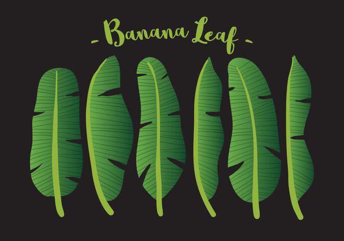 Feuille de banane vectorielle vecteur