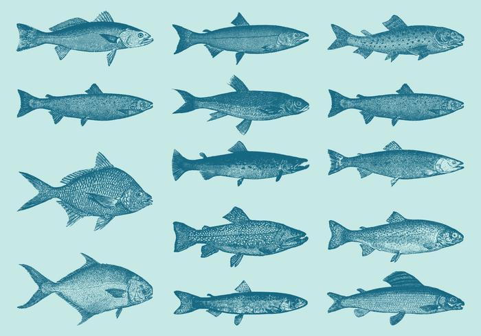 Trucs et vecteurs de poissons anciens vecteur