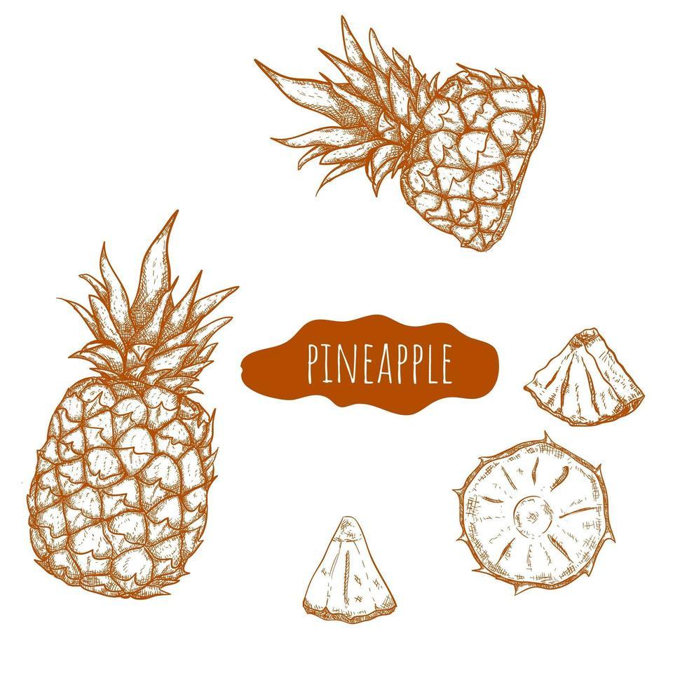 ensemble dessiné à la main d'ananas vecteur