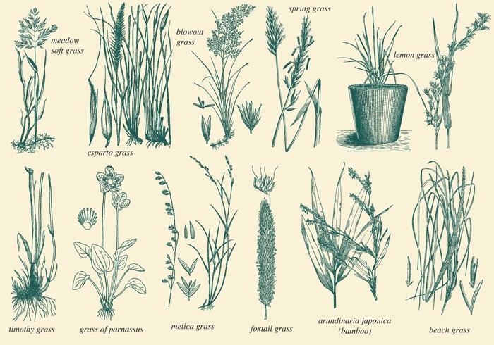 Vecteurs de l'herbe sauvage vecteur