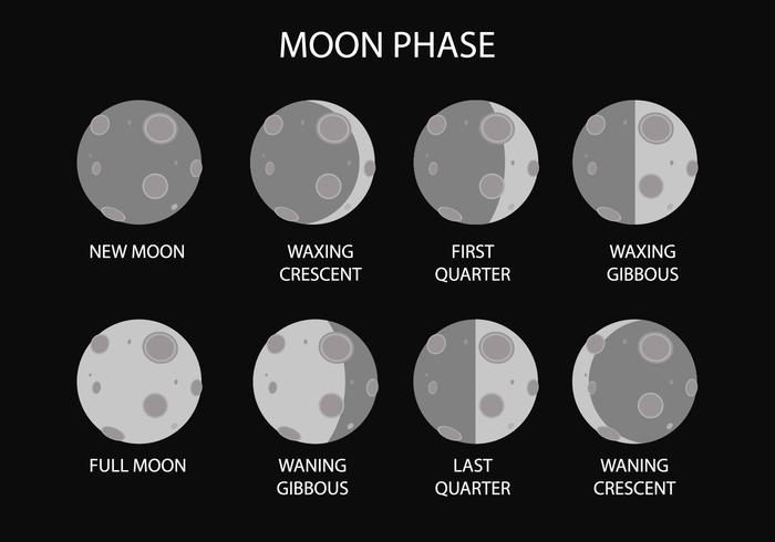 Vecteur de phase de lune gratuit