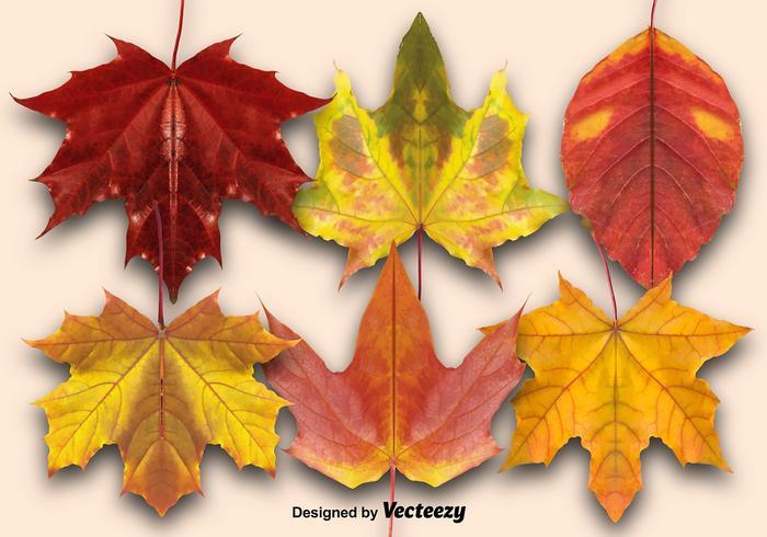 Ensemble vectoriel de feuilles d'automne