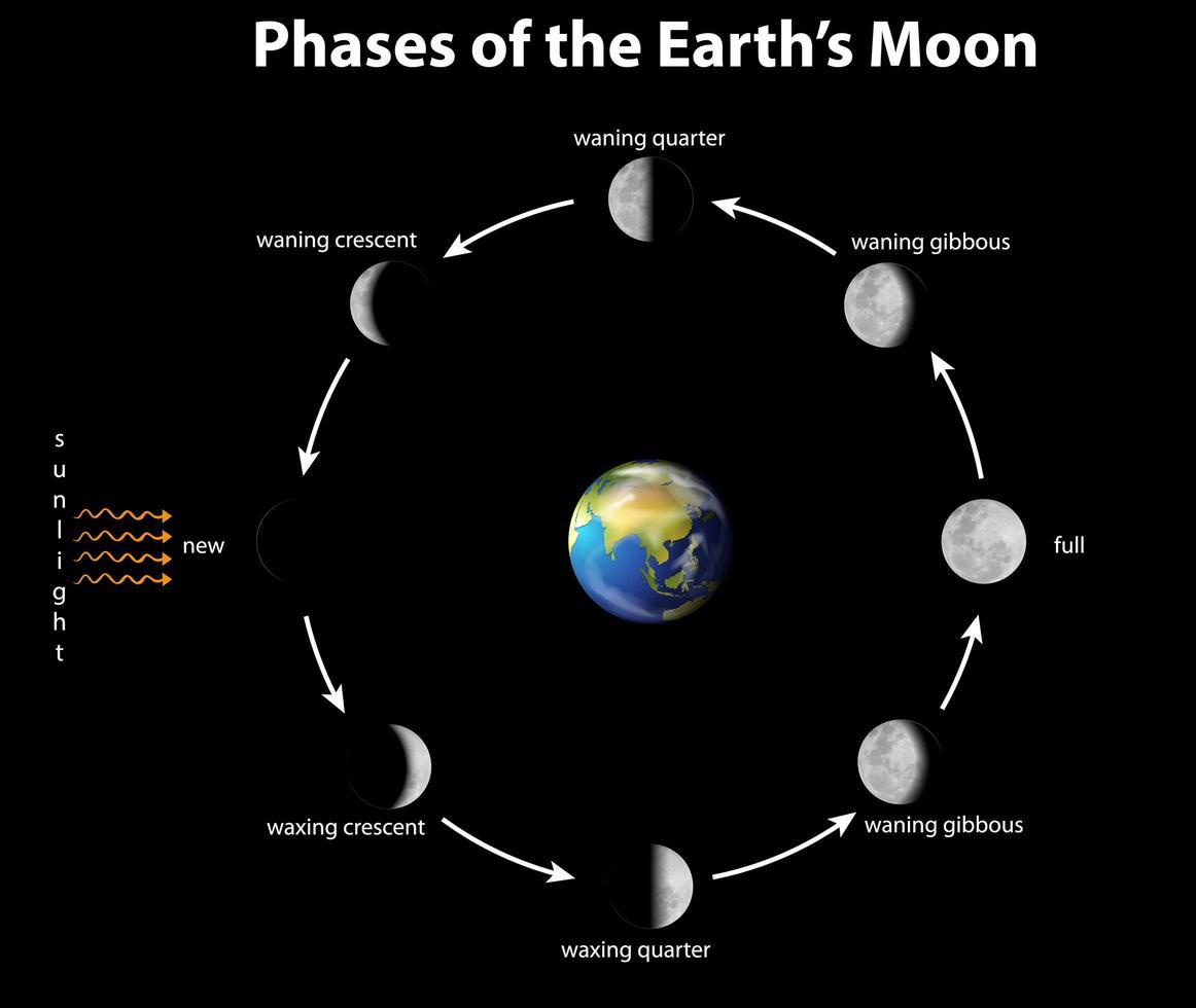 diagramme montrant les phases de la lune terrestre vecteur