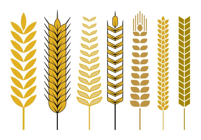 Vecteur de tige de blé libre