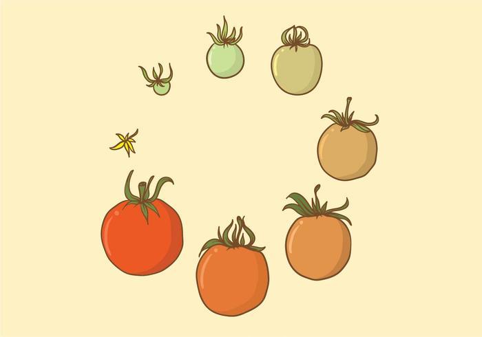 Ensemble de culture de tomates vecteur