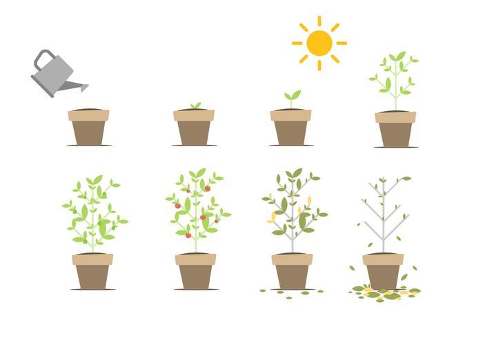 Vecteur libre grandissant
