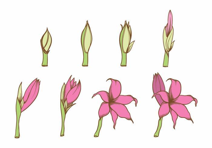 Grow Up Flower Set vecteur