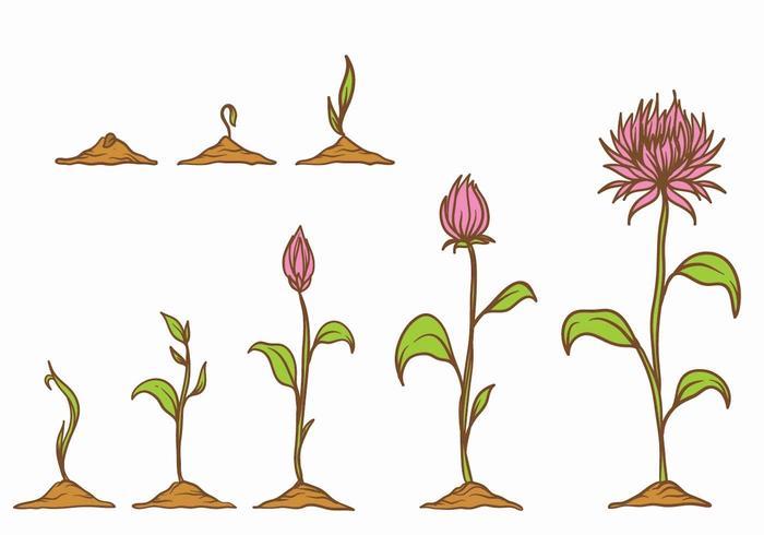 Grow up plant set vecteur