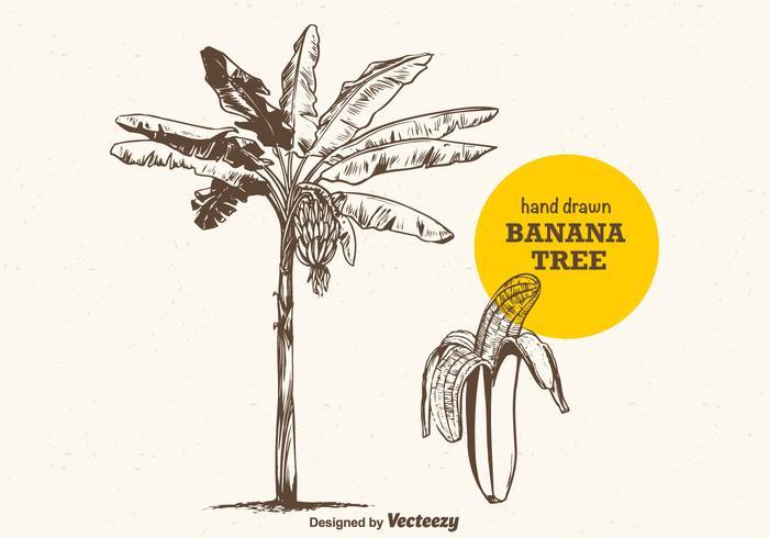 Banana Tree dessiné à main libre vecteur