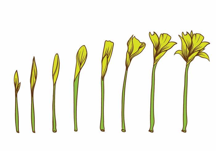 Ensemble de plantes à fleurs jaunes vecteur