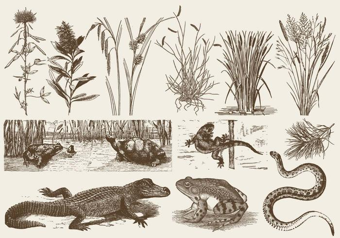 Swamp Faune and Flora vecteur