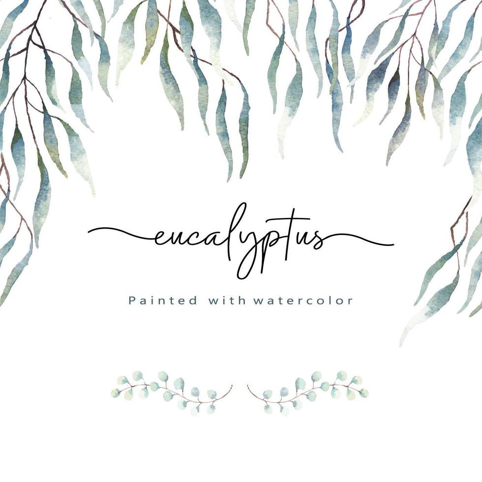 feuilles d'eucalyptus peintes à l'aquarelle vecteur
