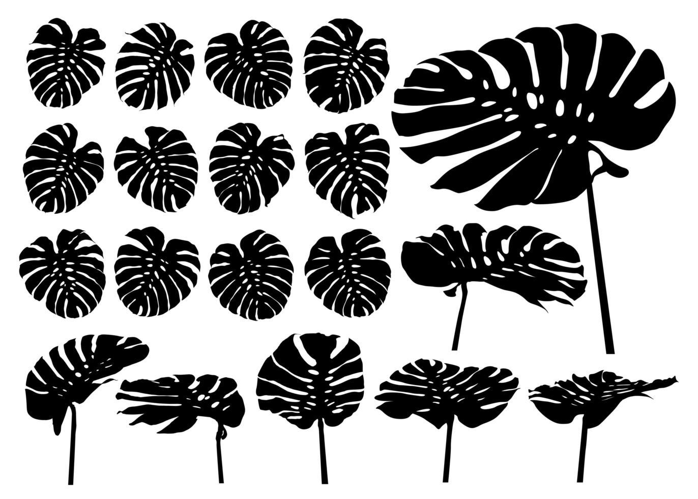 monstera plante tropical feuilles silhouette ensemble vecteur