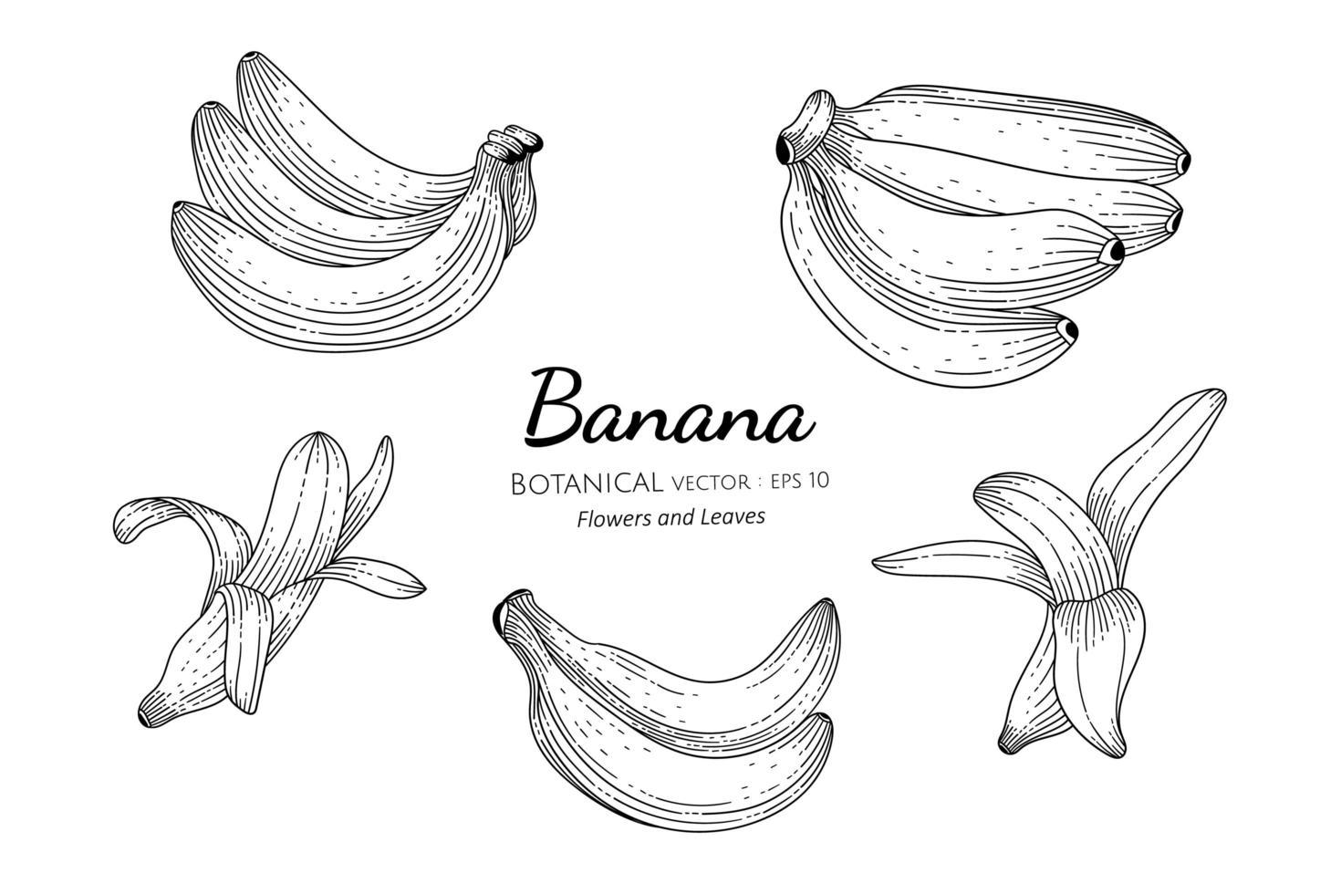 ensemble de banane dessiné à la main vecteur
