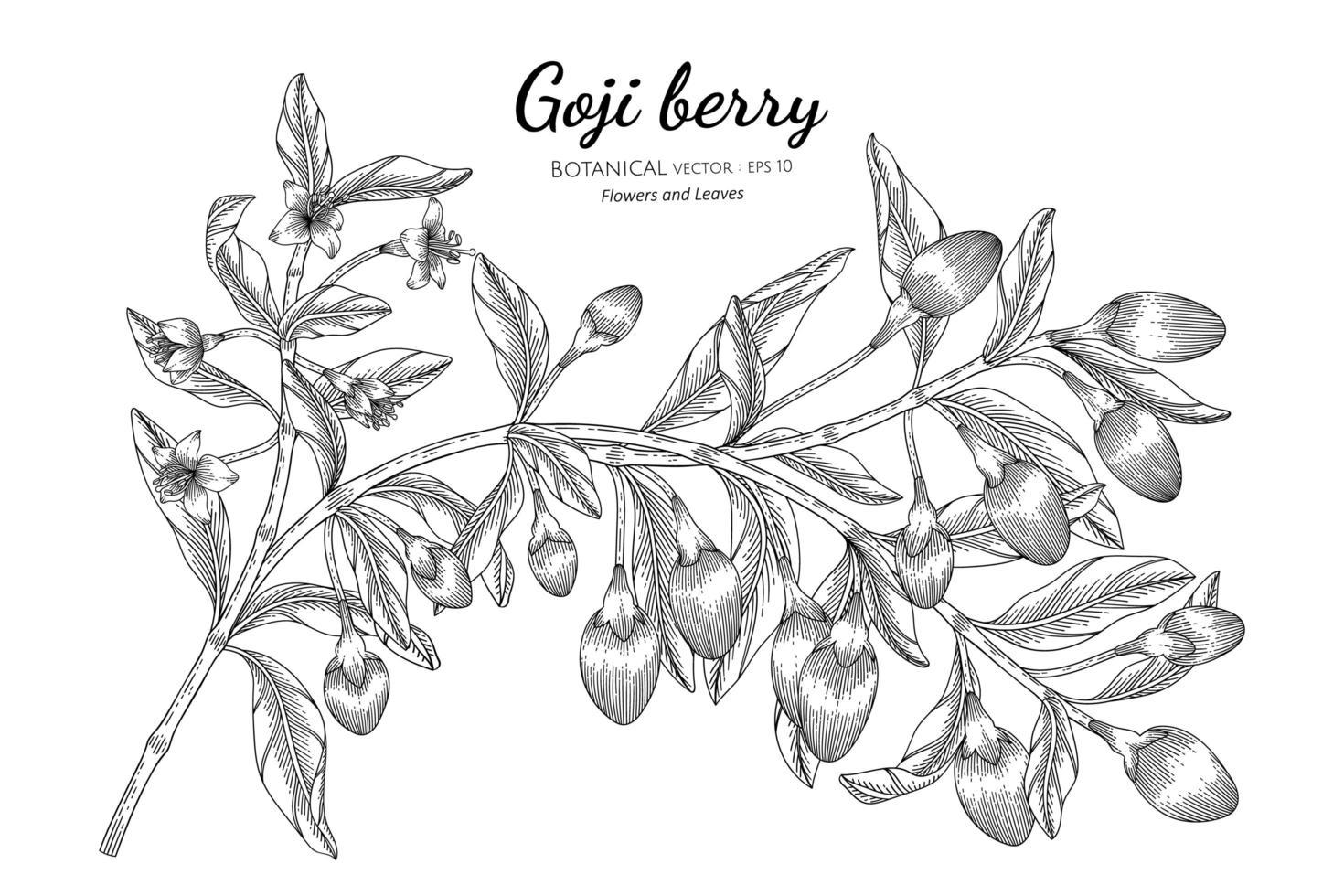 fruit de baies de goji dessiné à la main vecteur
