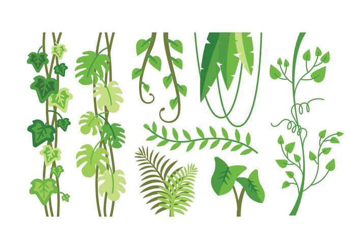 Vecteurs de plantes tropicales vecteur
