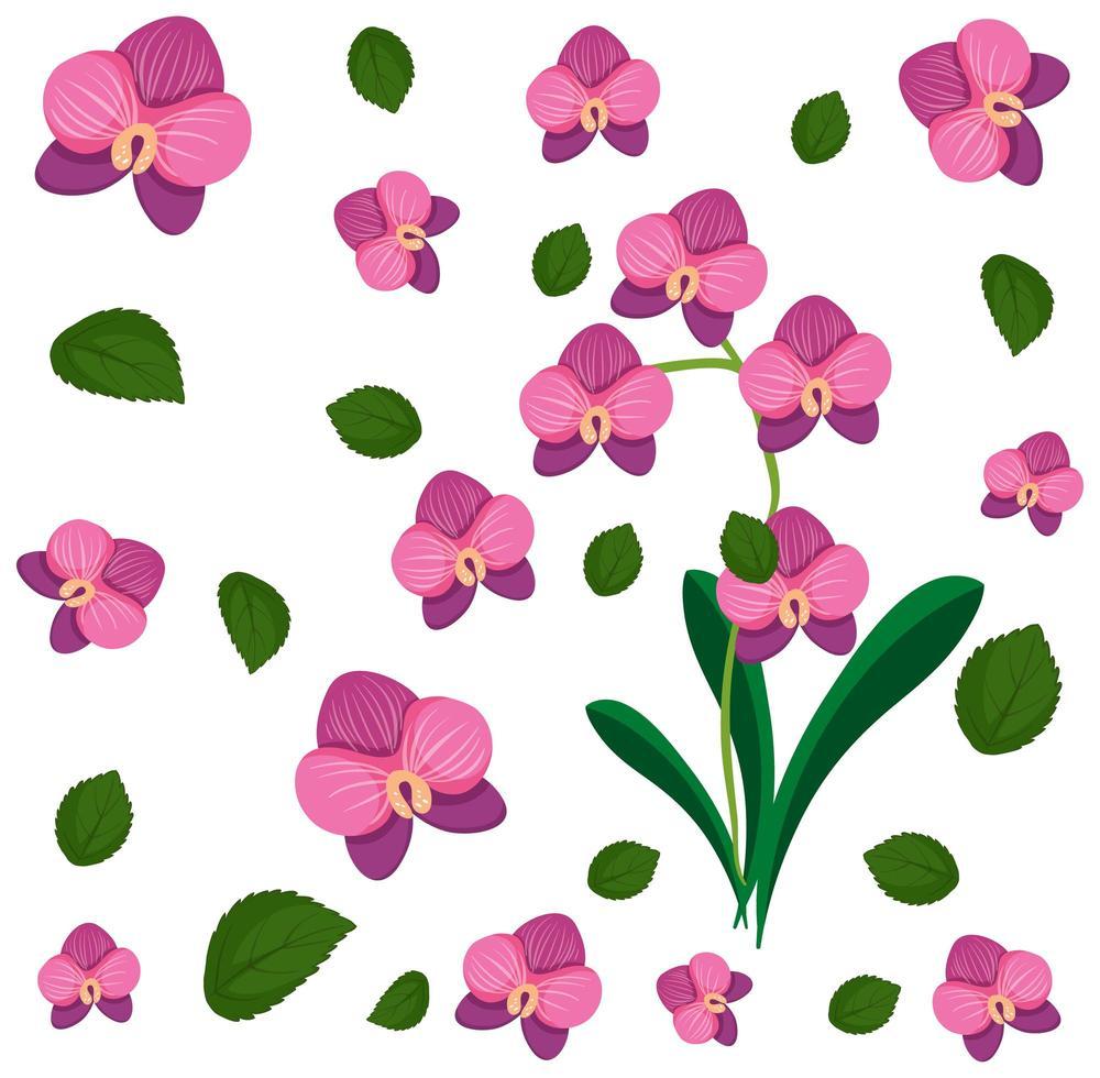 ensemble de fleurs et de feuilles d'orchidées vecteur