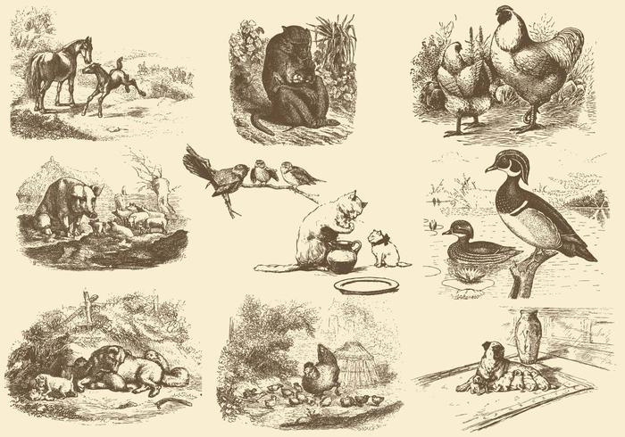 Illustrations de la mère animale vecteur