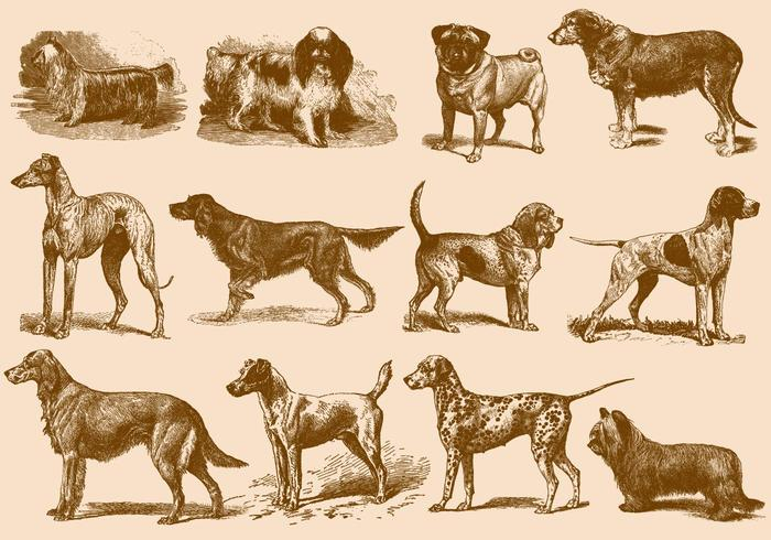 Illustrations de chien brun vintage vecteur