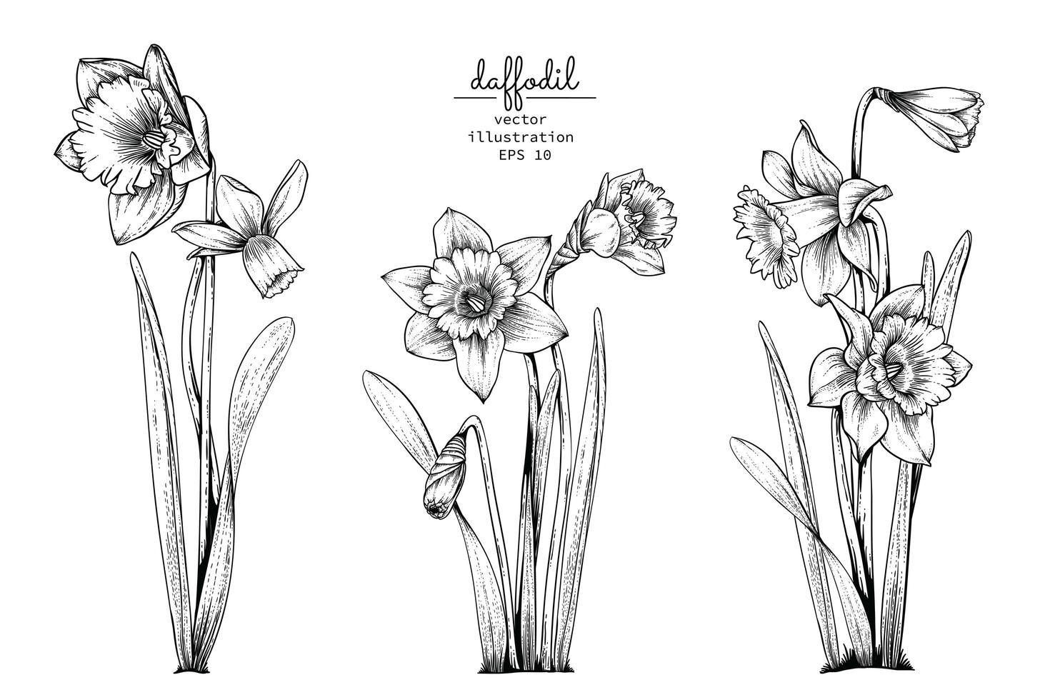Ensemble de fleurs jonquille ou narcisse vecteur