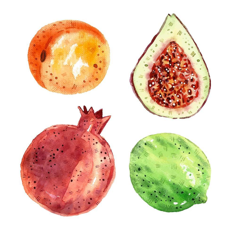 grenade, figues, citron vert, abricot. vecteur