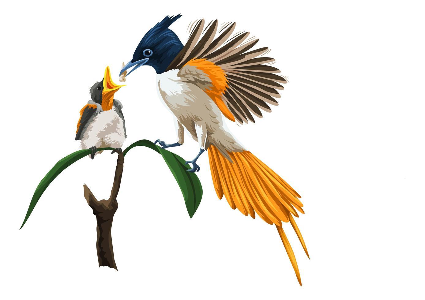 poussin d'alimentation des oiseaux vecteur