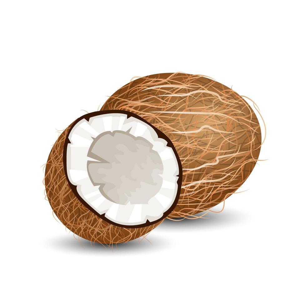 noix de coco isolé sur blanc vecteur
