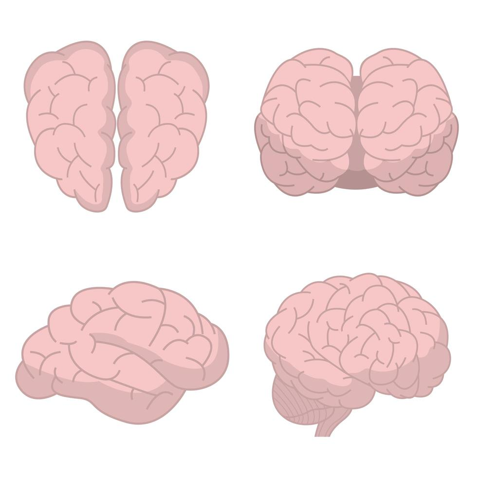 cerveau humain isolé vecteur