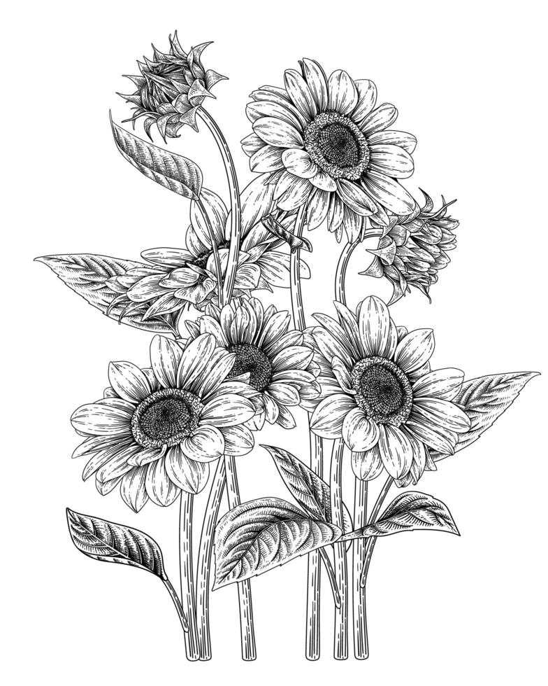 tournesols dessinés à la main vecteur