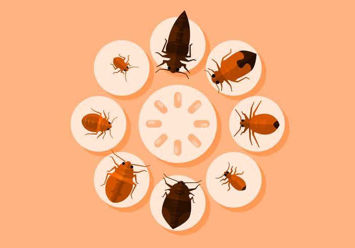 Illustration Vecteur de Bed Bugs