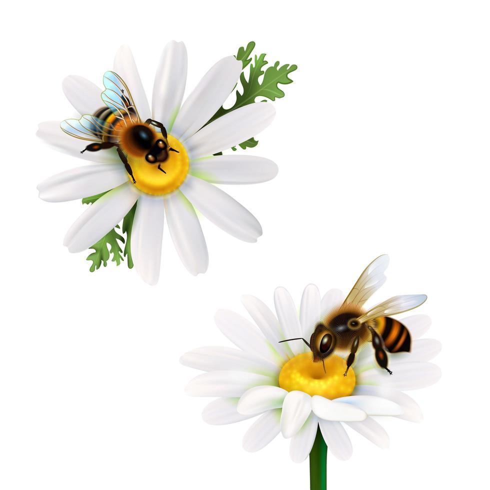abeille réaliste sur un ensemble de fleurs vecteur