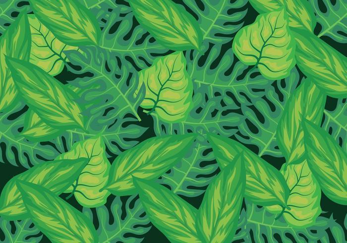 Feuilles tropicales Fond vecteur