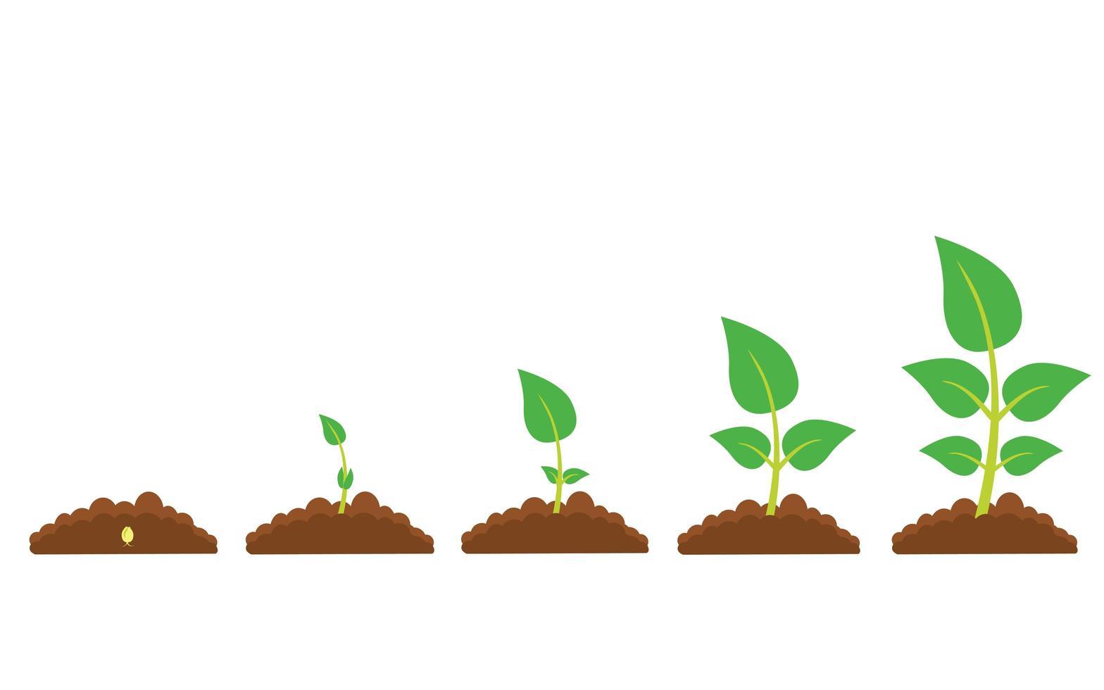phases de croissance des plantes vecteur