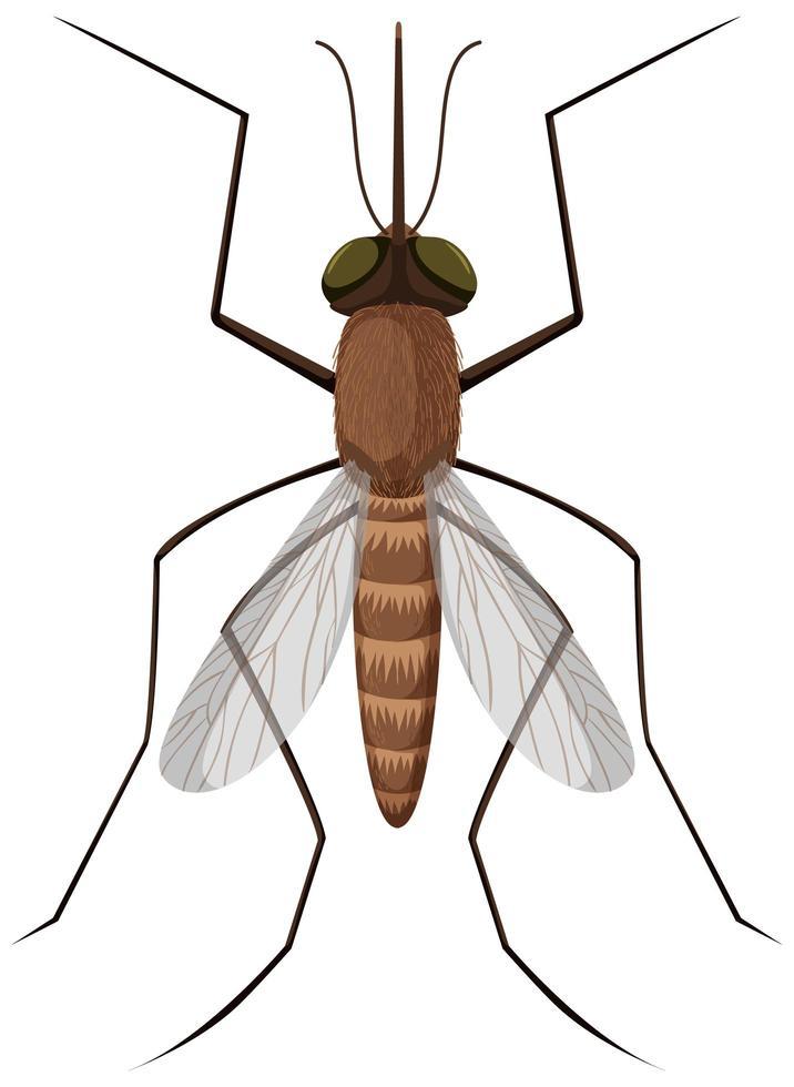moustique sur fond blanc vecteur