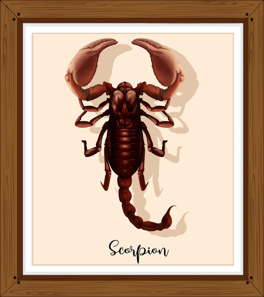 scorpion dans un cadre en bois vecteur