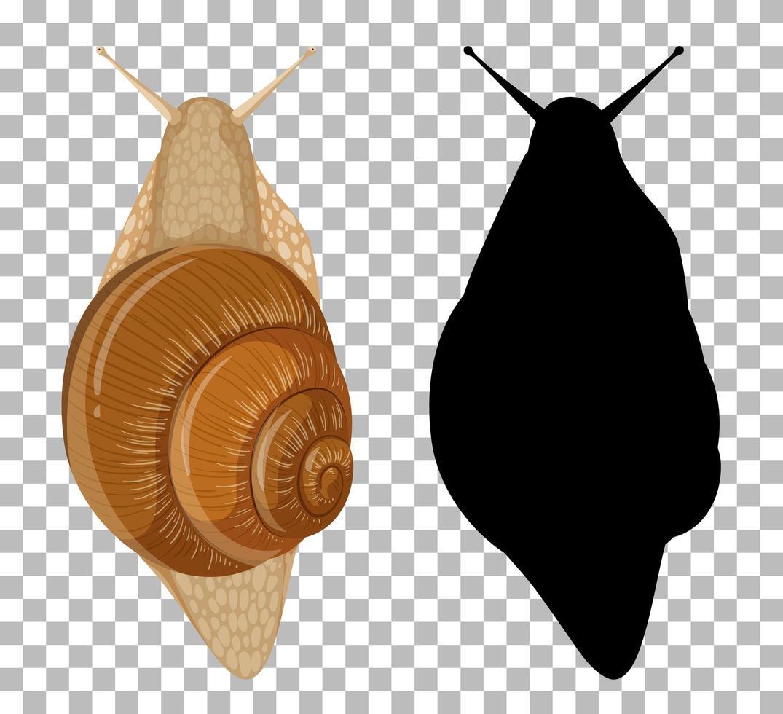 escargot avec sa silhouette vecteur