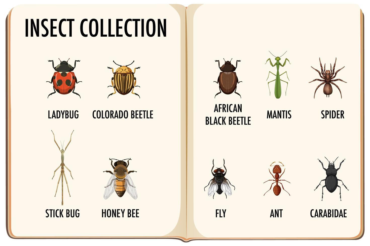 ensemble de collection d'insectes dans le livre vecteur