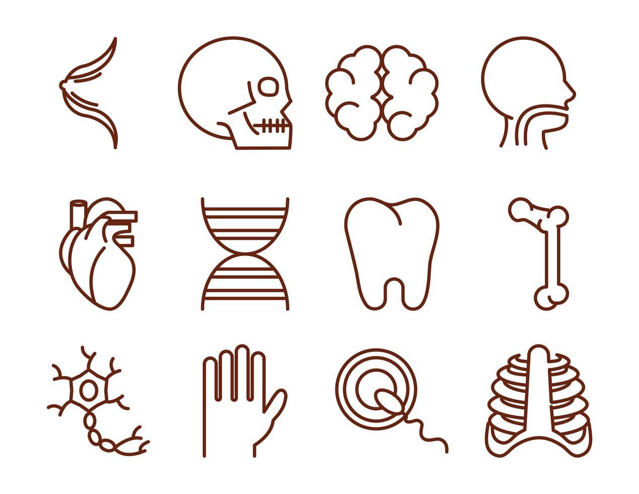 Jeu d'icônes de l'anatomie et de la santé du corps humain vecteur