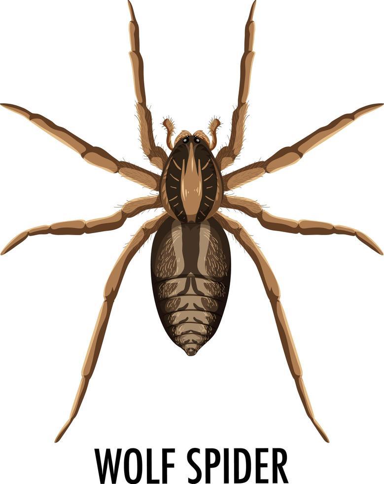 araignée-loup isolé sur fond blanc vecteur
