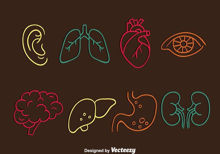 Vectoriel d'icônes de ligne d'organe humain