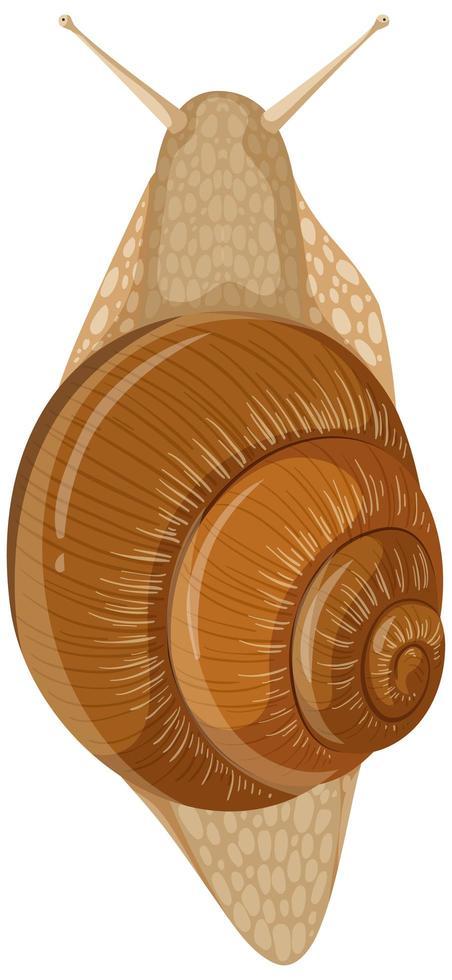 escargot isolé sur fond blanc vecteur