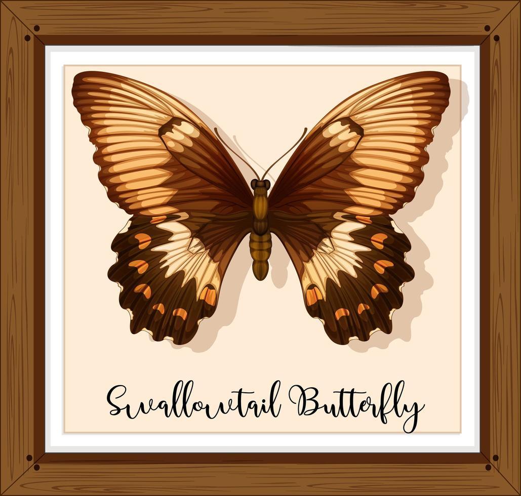 papillon sur cadre en bois vecteur