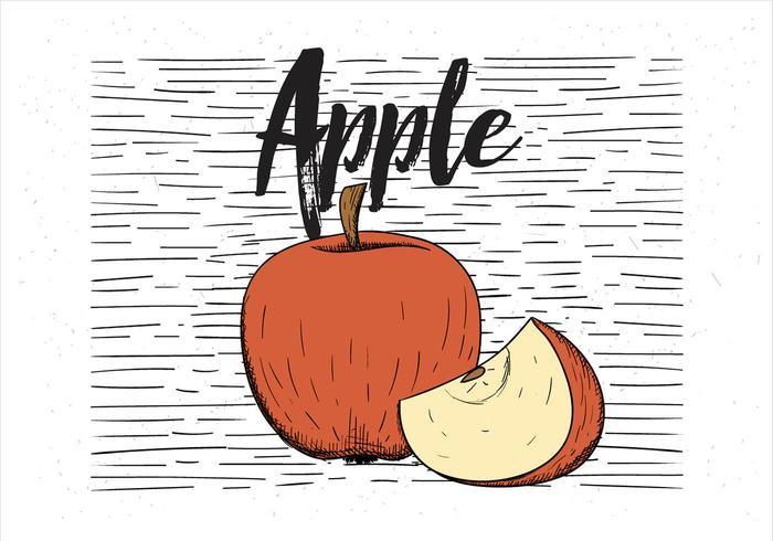 Vector Free Drawn Apple Illustration